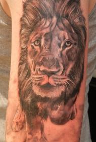 肩部棕色逼真的狮子头纹身图片