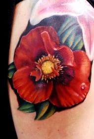 肩部彩色逼真的罂粟花与露珠纹身