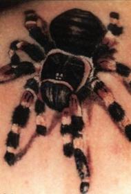 肩部写实的狼蛛蜘蛛纹身图案