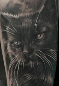 男生手臂上黑色素描点刺技巧创意猫纹身图片