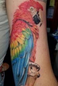 男生手臂上彩绘水彩素描创意鹦鹉纹身图片