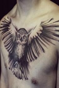 神秘猫头鹰胸部纹身