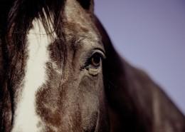 健壮的马匹图片(9张)