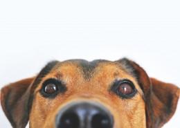 一只可爱的狗图片(10张)