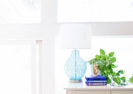 清新的室内盆栽图片(11张)