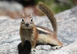 活泼可爱的小松鼠图片(16张)