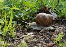 缓慢爬行的蜗牛图片(15张)