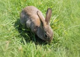 一只野生兔子图片(15张)