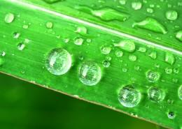 挂着水珠的绿叶图片(14张)