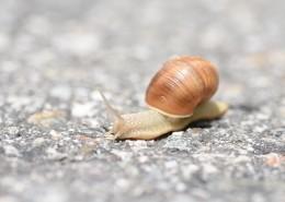 缓慢爬行的蜗牛图片(13张)