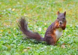 可爱的棕色松鼠图片(11张)