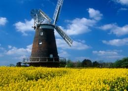 荷兰风车图片(13张)