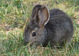 灰色的兔子图片(13张)