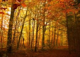 秋天树林风景图片(13张)