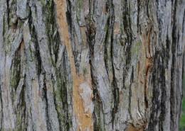 纹络各异的树皮图片(14张)