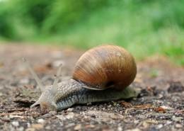 蜗牛高清图片(15张)