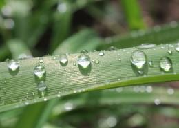 挂着水滴的叶子图片(10张)