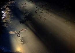阳光穿过树缝唯美风景图片(12张)
