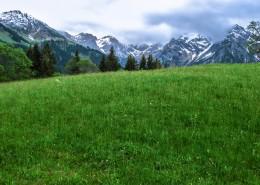 碧绿的草地图片(14张)