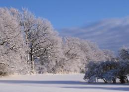 冬季唯美的森林雪景图片(16张)