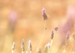 唯美小清新植物图片(11张)
