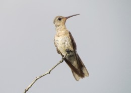 小巧的蜂鸟图片(11张)