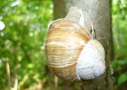 蜷缩在壳里的蜗牛图片(14张)