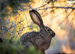 竖起双耳的兔子图片(12张)