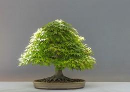 绿色植物盆景图片(14张)