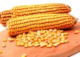 颗粒饱满的玉米图片(15张)