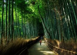 翠绿的竹林图片(11张)