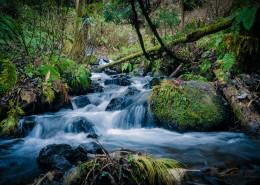 涓涓流淌的溪水图片(16张)