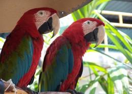 两只鹦鹉高清图片(15张)