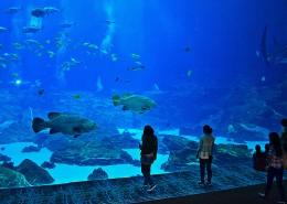 奇妙的水族馆图片(11张)