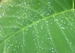 叶子上的水珠图片(11张)