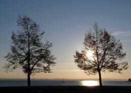 傍晚唯美的树图片(14张)