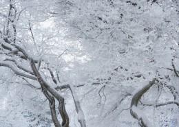 结霜的树枝图片(13张)