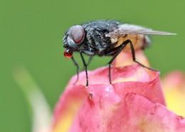 苍蝇微距摄影图片(13张)