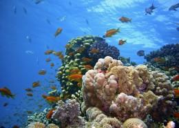 海底的珊瑚礁图片(15张)