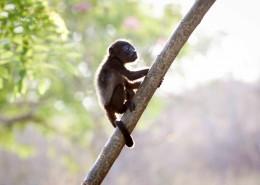 可爱的黑色猴子图片(9张)
