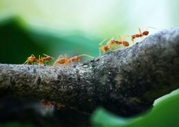 蚂蚁微距摄影图片(11张)