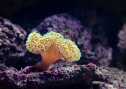 深海里的珊瑚图片(11张)
