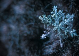 显微镜拍摄的雪花图片(13张)