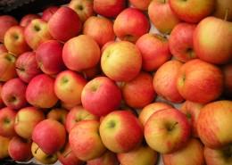 一堆苹果图片(16张)