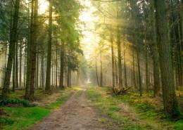 静谧的林间小路图片(14张)