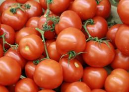 鲜红的西红柿图片(13张)