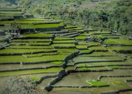 层叠的乡村梯田风景图片(11张)
