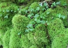 绿色的苔藓图片(14张)