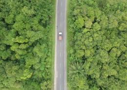 树林里的公路图片(13张)