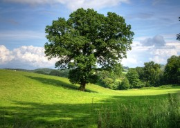 绿油油的树图片(10张)